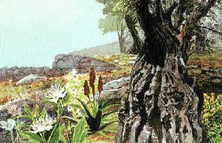 צמחי רפואה בעולם המקרא: