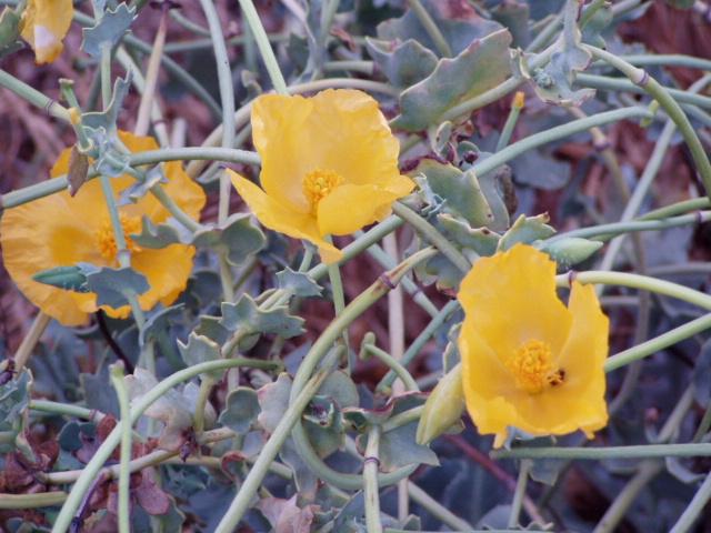 צמחי רפואה-וצמחי טבלין
