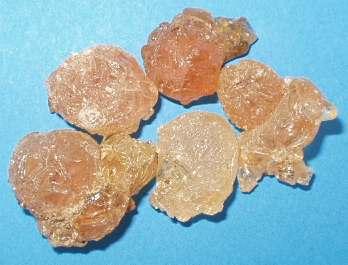 ארון הבשמים היהודי-על האפרסמון הקדום