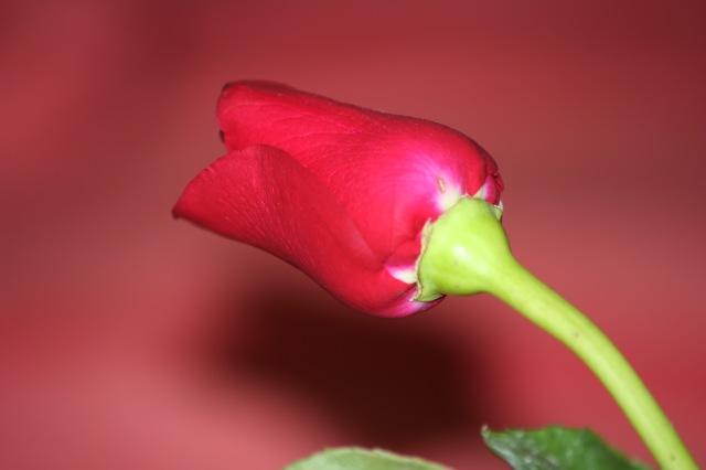 """יום הולדת שמח ל""""ריטה """"  24/03/08"""